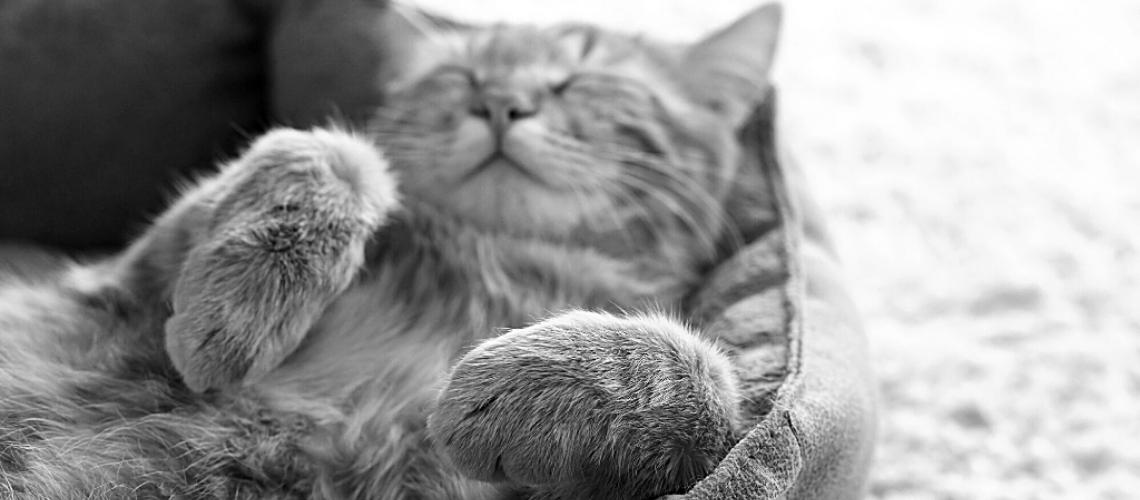 Din kat er tryghedsnarkoman